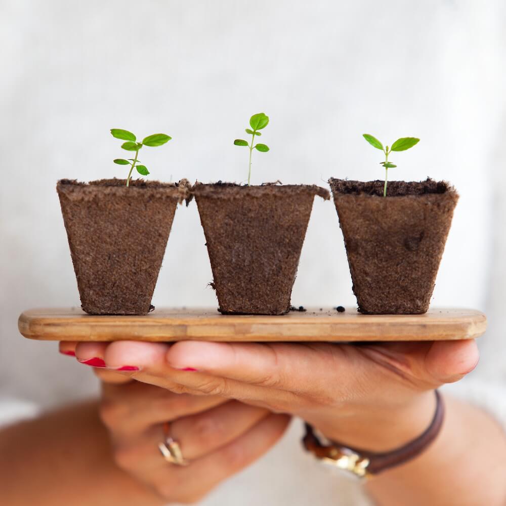 Natürliche Verhütung mit Pflanzen